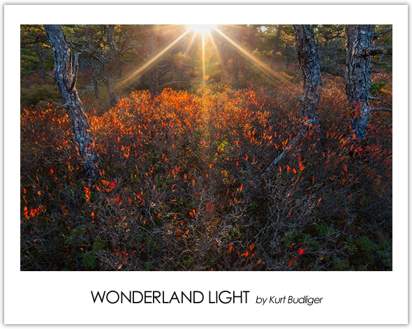 Wonderland-Light