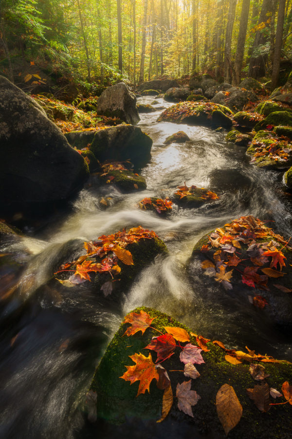 photograph of a stream and colorful foliage in  Vermont