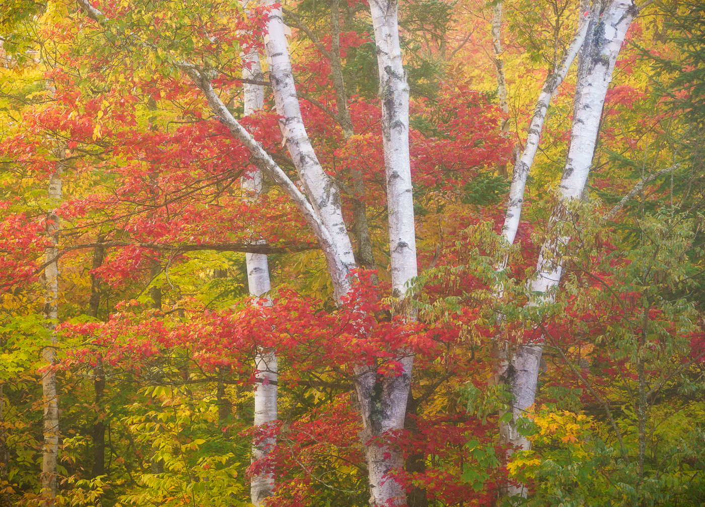 Autumn in Vermont photography workshop