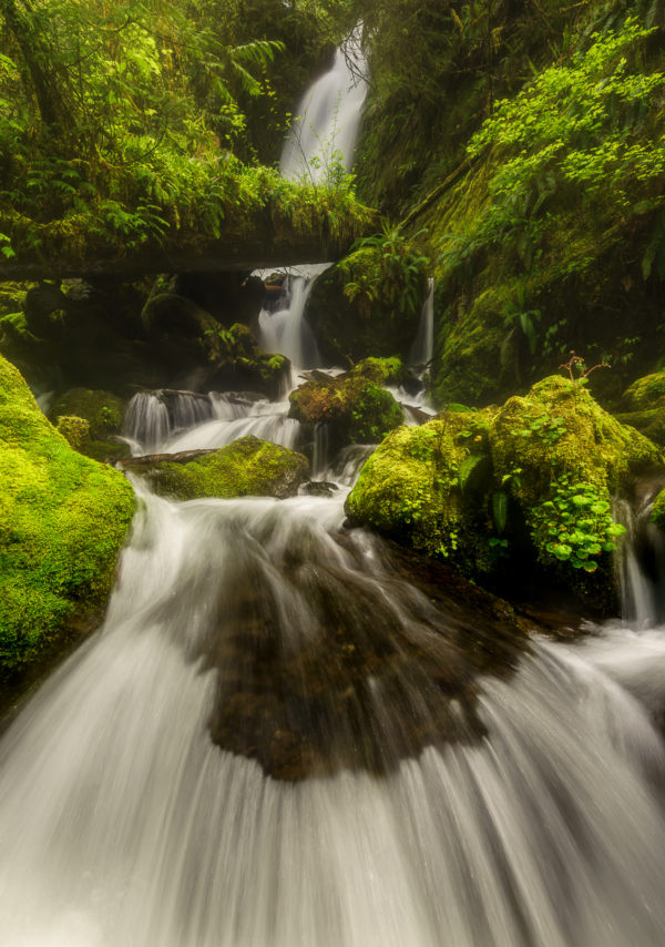 Beautiful photograph of a waterfall in Olympic National Park
