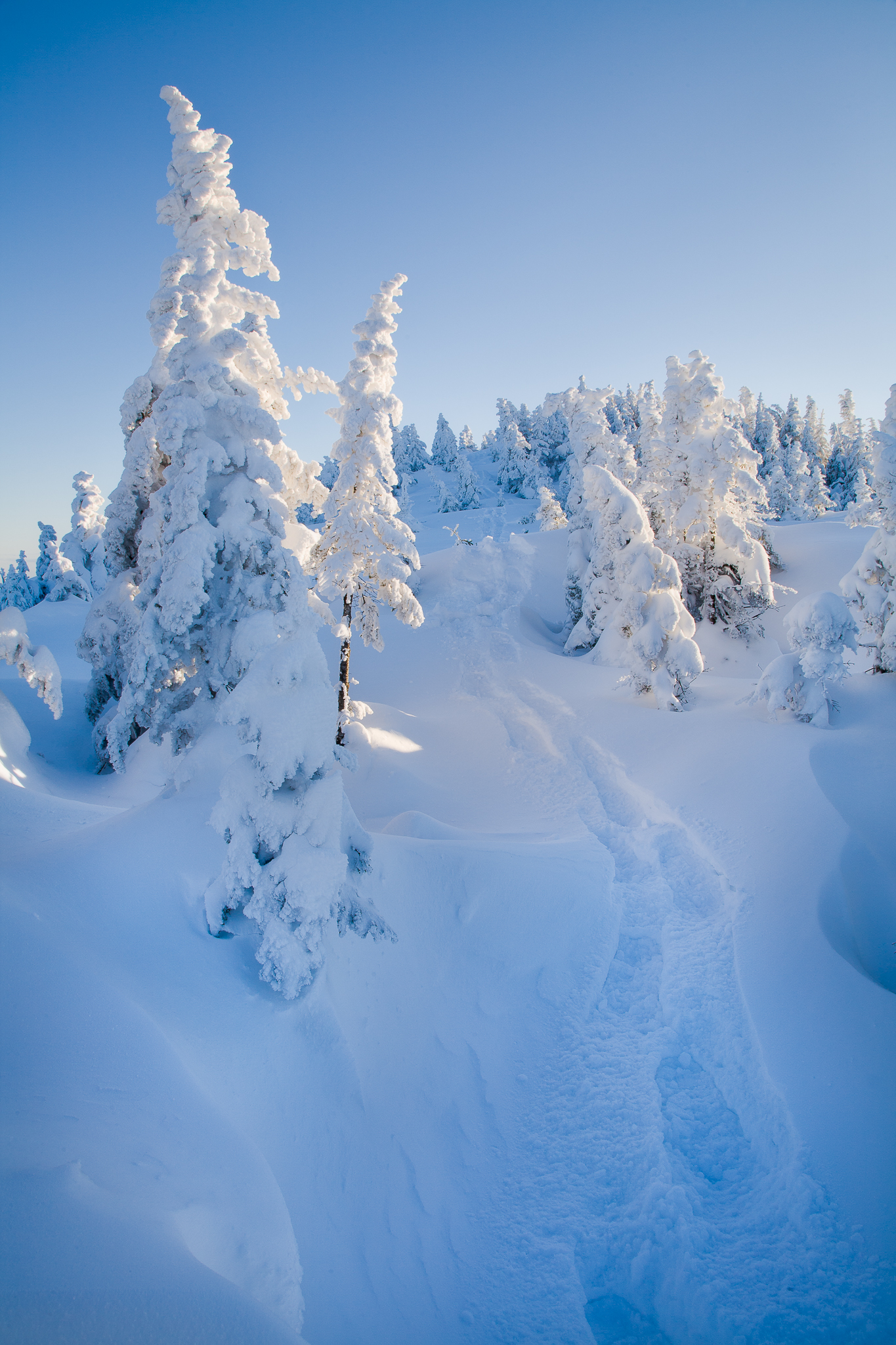 Winter Photography: Be Prepared, Be Successful