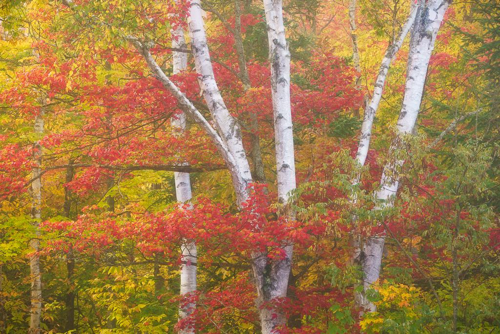 Autumn in Vermont Photography Workshop